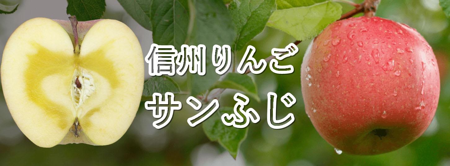 信州りんご 贈答用サンふじ