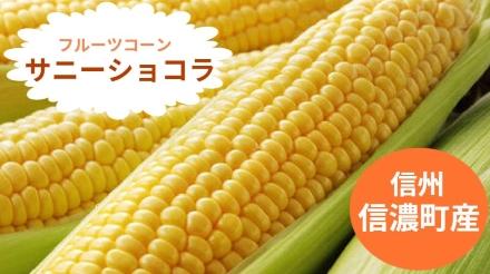 信州長野 信濃町産 サニーショコラ